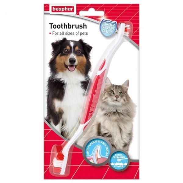 Догляд за ротовою порожниною кішки: чим може обернутися байдужість господарів