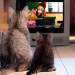 Как кошки смотрят телевизор