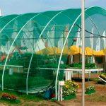 Применение затеняющей сетки для защиты растений в теплице