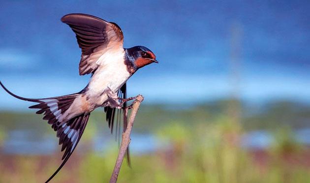 Картинки по запросу розповідь-опис про перелітного птаха