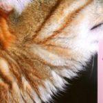 Чому кішки люблять валер'янку