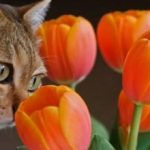 Екзекан – препарат для лікування котячих хвороб шкіри
