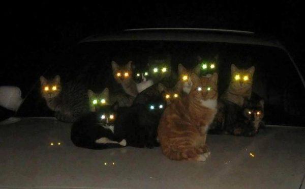 Як бачать кішки: світ очима вихованця